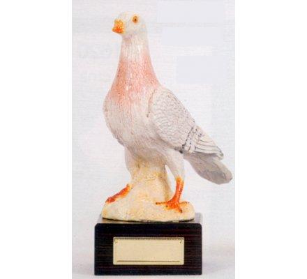 Trophée pigeon 24 cm - CR1605